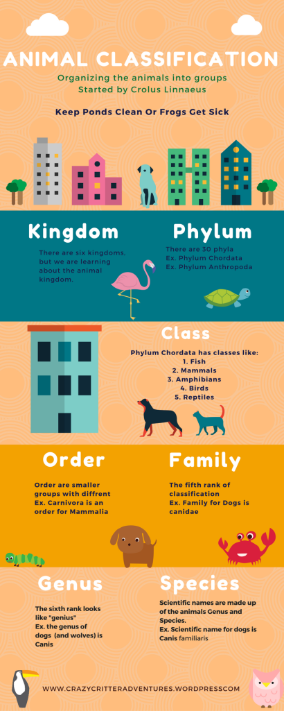 animal-classification